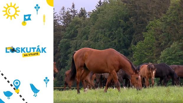Pohled na svět z koňského hřbetu. Naučte se jezdit na tomto krásném zvířeti!